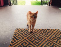 """""""Ginger Baker"""" the neighbourhood #straycat #cats #kitties He looks through the window and meows until I bring him food."""